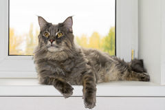 Katze auf Fenster Lizenzfreie Stockfotografie