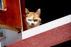 Katze auf Fenster Stockfotografie