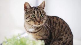 Katze auf Fensterbrett zu Hause stock footage