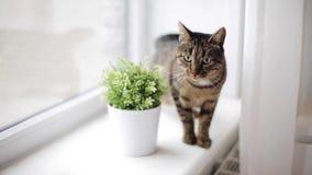 Katze auf Fensterbrett zu Hause stock video
