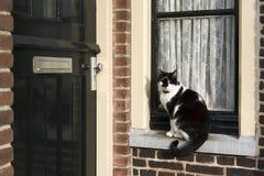 Katze auf Fensterrahmen Stockbild