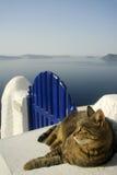 Katze auf Gatter in Santorini, Griechenland Lizenzfreies Stockfoto