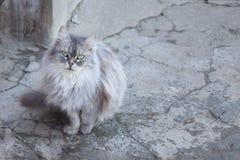 Katze auf gebrochenem Beton Stockbild
