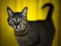 Katze auf gelbem Backround Lizenzfreies Stockfoto