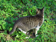Katze auf Glas Lizenzfreie Stockfotos