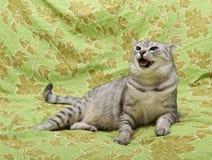 Katze auf grünem Carperhintergrund, verärgerte Katze, Katze zu Hause, Porträt der Katze Stockfotografie
