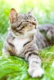 Katze auf grünem Gras Lizenzfreies Stockbild
