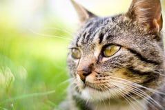 Katze auf grünem Hintergrund Stockfotos
