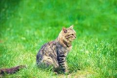 Katze auf grünem Rasen stockfotografie