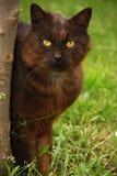 Katze auf Gras stockfotografie