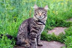 Katze auf Gras Stockbild