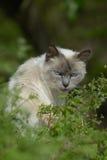 Katze auf Ile de re, Frankreich Lizenzfreie Stockfotografie