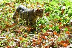 Katze auf Jagd Stockbilder
