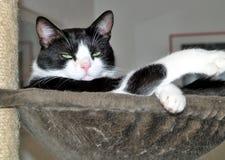 Katze auf Katzenbaum Lizenzfreie Stockfotos