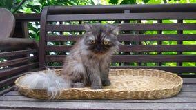 Katze auf Korbwarenabdeckung Lizenzfreies Stockbild