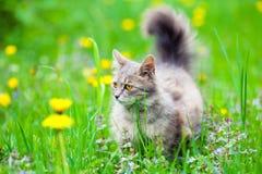 Katze auf Löwenzahnwiese Stockbilder