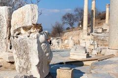 Katze auf römischen Steinsäulen und Altar ruiniert Raum in ephesus Bogen Lizenzfreies Stockbild