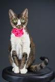 Katze auf Schemel Lizenzfreies Stockfoto
