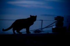 Katze auf Segelboot an der Dämmerung im Hafen von Cuttyhunk-Insel, Massachus lizenzfreies stockbild