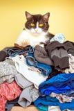 Katze auf Stapel von Kleidung Stockbilder