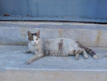 Katze auf Steinschritten stockbild