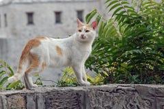 Katze auf Steinwand Stockfoto