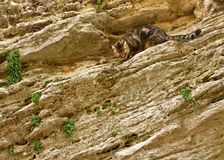 Katze auf Steinwand Stockfotografie