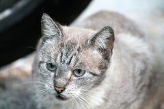 Katze auf Straße Lizenzfreie Stockfotografie