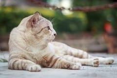 Katze auf Straße lizenzfreie stockbilder