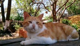 Katze auf Strandbar Stockfotografie
