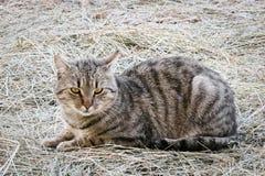 Katze auf Stroh Stockbilder