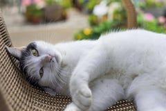 Katze auf Stuhl Stockfoto