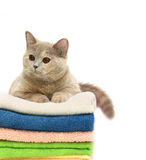 Katze auf Tüchern eines Stapels Stockfoto