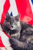 Katze auf Union Jack Stockfotos