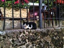 Katze auf Wand Stockfoto