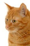 Katze auf weißem Hintergrund stockfotos
