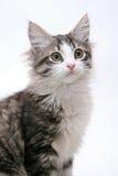 Katze auf weißem Hintergrund Lizenzfreie Stockfotografie