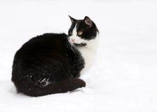 Katze auf weißem Schnee Stockfotos