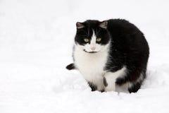 Katze auf weißem Schnee Lizenzfreies Stockbild