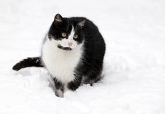 Katze auf weißem Schnee Stockfoto