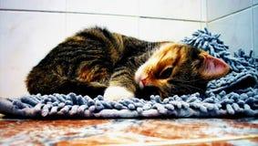 Katze auf weicher Wolldecke Stockfoto
