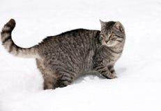 Katze auf weißem Schnee Lizenzfreie Stockfotos