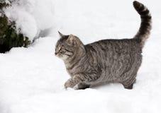 Katze auf weißem Schnee Stockbilder