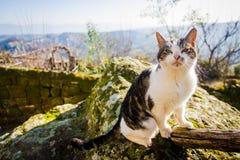 Katze auf Zaun lizenzfreie stockfotos