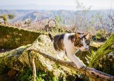 Katze auf Zaun lizenzfreies stockfoto