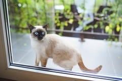 Katze am Balkon Lizenzfreies Stockfoto