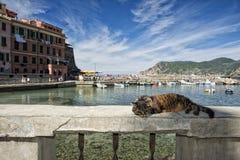 Katze beim Stillstehen in Vernazza-Hafen stockfotos