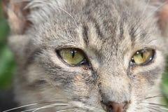 Katze bereit zur Jagd stockfoto