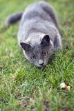 Katze betriebsbereit zum Angriff Stockbild
