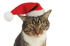 Katze bohrte mit Weihnachtshut Stockbild